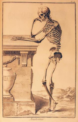 Anatomie from Diderot's Encyclopedie