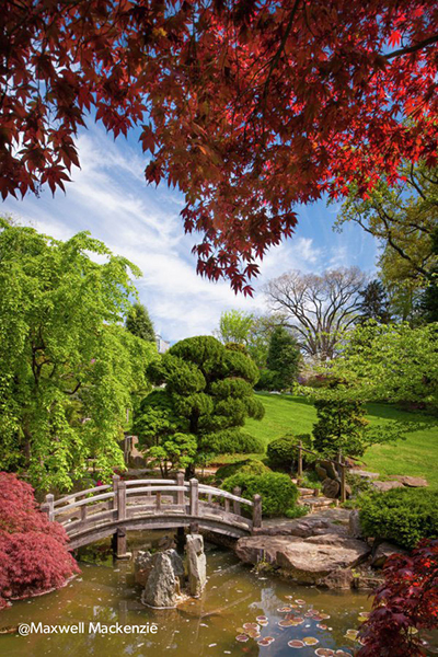 Japanese-style garden at Hillwood © Maxwell MacKenzie 2014 (Image courtesy Hillwood Estate, Museum and Gardens)