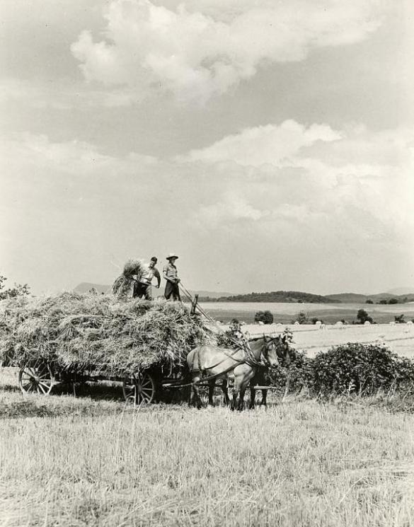 Hay wagon, Shenandoah Valley, 1932