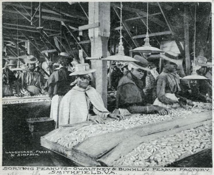 Sorting Peanuts, Smithfield, c. 1913